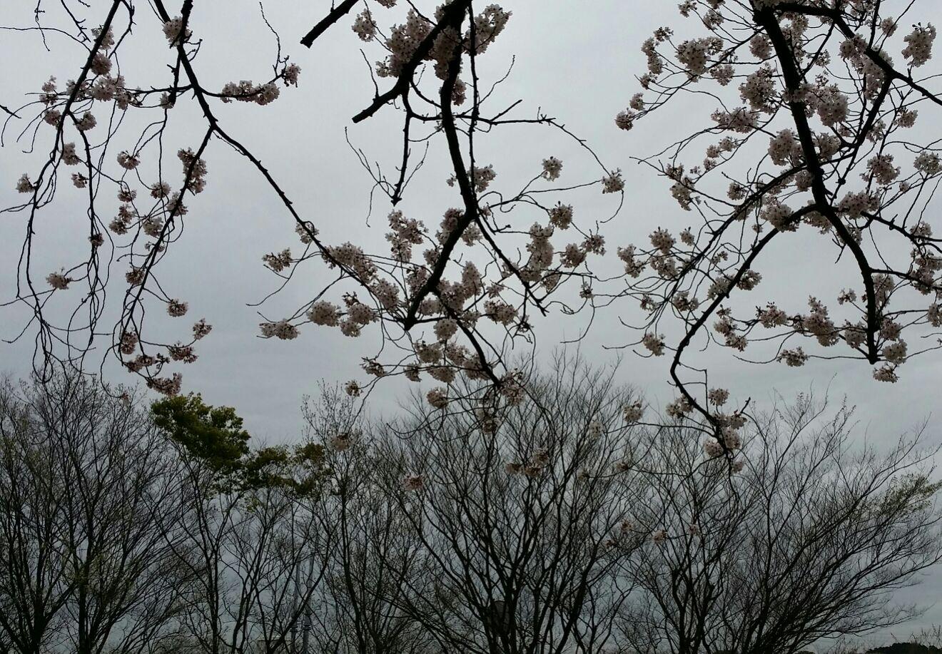 【文学フリマ】金沢御礼&東京よろしく